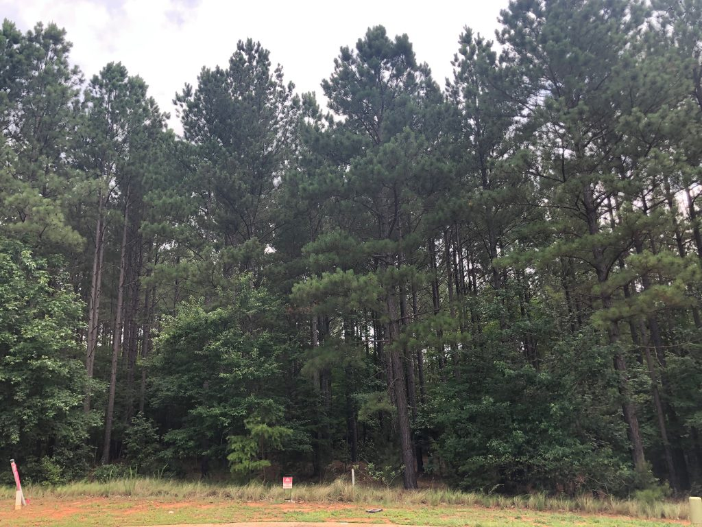 Our Charlotte Build: Buying Land